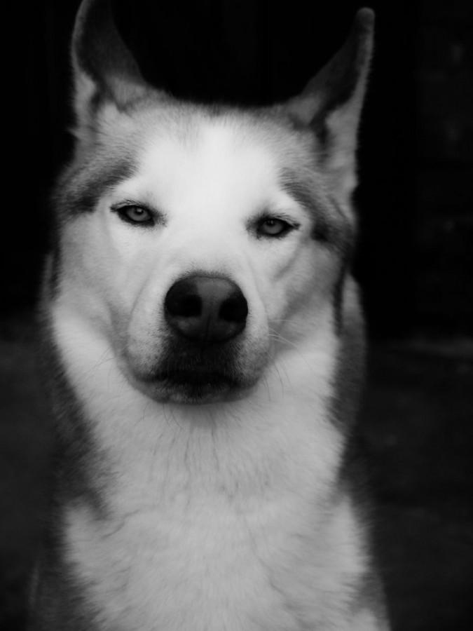In Black and White by Bobby_j_lennon-d488fku