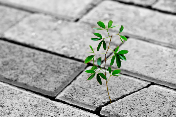 Color Splash Black and White Photo - Plant through Brick